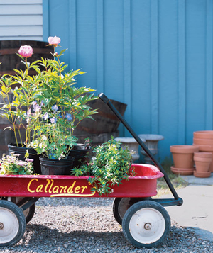 Wagon filled with plants