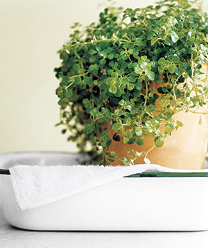 Watering Houseplants While You're Away