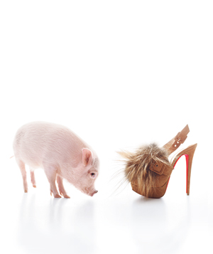 Pig with Shoe