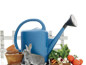 Watering can, pots, produce and a rabbit by a small fence