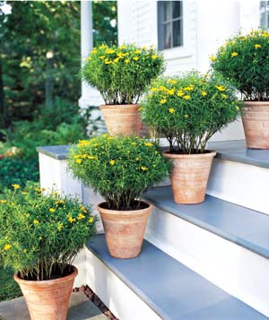 Several outdoor plants on stairs