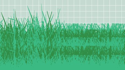 4 Organic Lawn Care Tips That Don't Require Harsh Chemicals