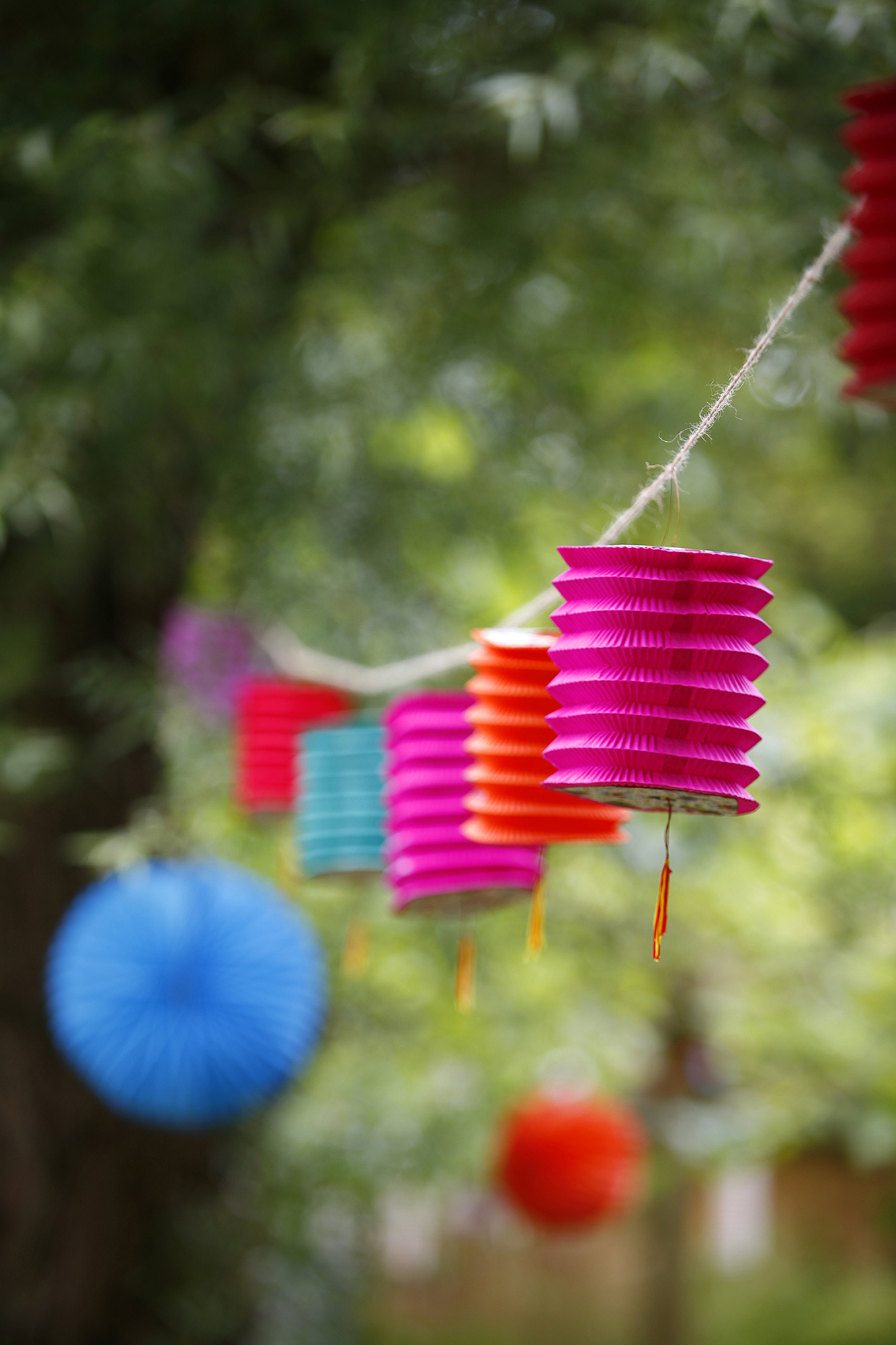 Paper lanterns in a tree