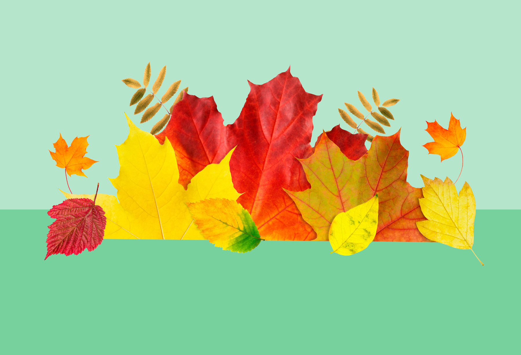 Fall landscape ideas - landscaping trends from the pros