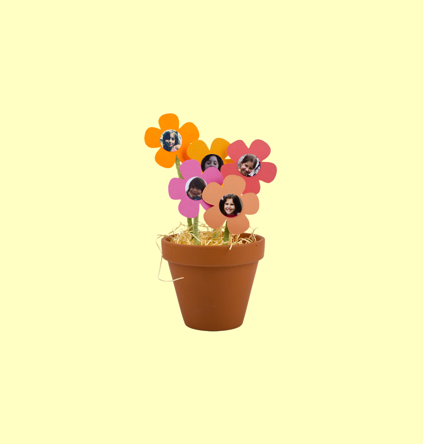 Potted Flower Photos