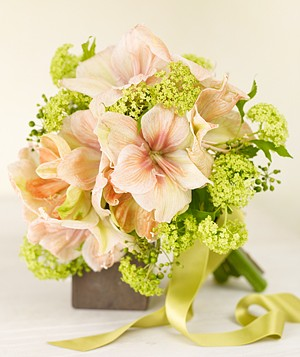 Bouquet of pink amaryllis