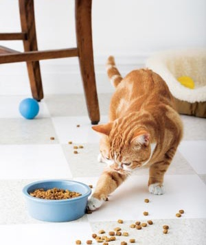 Cat playing with food
