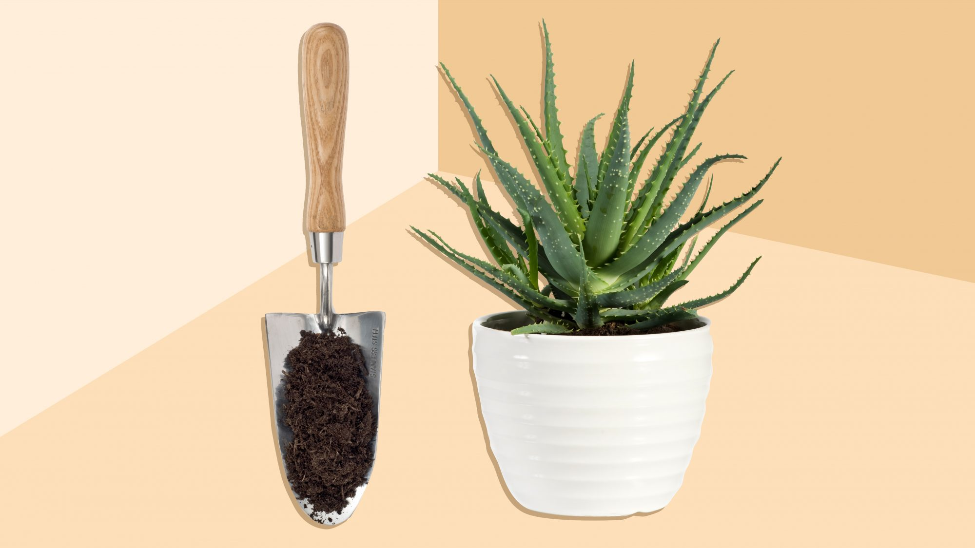 How to Repot a Plant Without the Mess