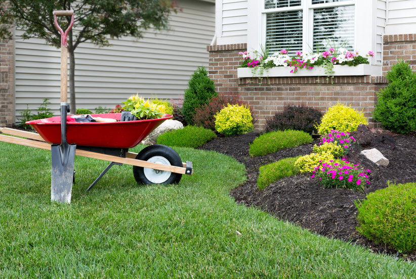 6 Things You Can Do Right Now for a Gorgeous Yard This Summer
