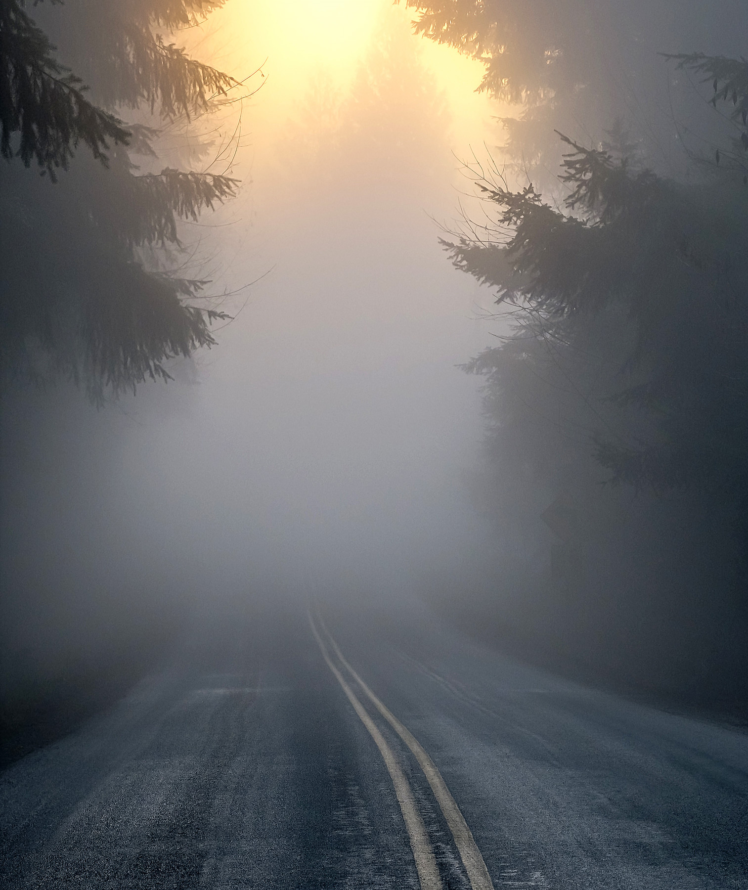 Road with trees and fog
