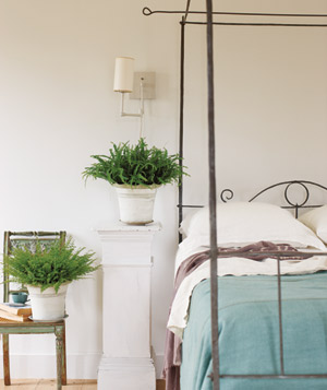 Ferns in a bedroom
