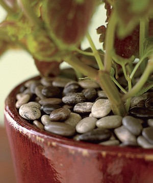 Stones used to insulate a potted plant