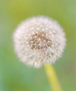 A Quick Guide to Allergy Relief