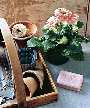 Bar of soap and potted plant