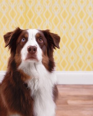 8 Things Your Pet Shouldn't Eat