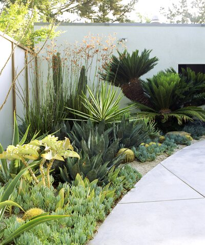 """What You Need to Know About """"Xeriscaping""""—the Por ... Xeriscape Front Of House Designs on construction designs, plant designs, pergola designs, education designs, patios designs, zen designs, masonry designs, landscape designs, family designs, permaculture designs, perennial designs, rockscape yard designs, photography designs, lavender garden designs, design designs, outdoor kitchens designs, shrubs designs, cactus designs, natural designs, contemporary designs,"""