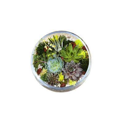 Making A Terrarium What You Need To Know Real Simple