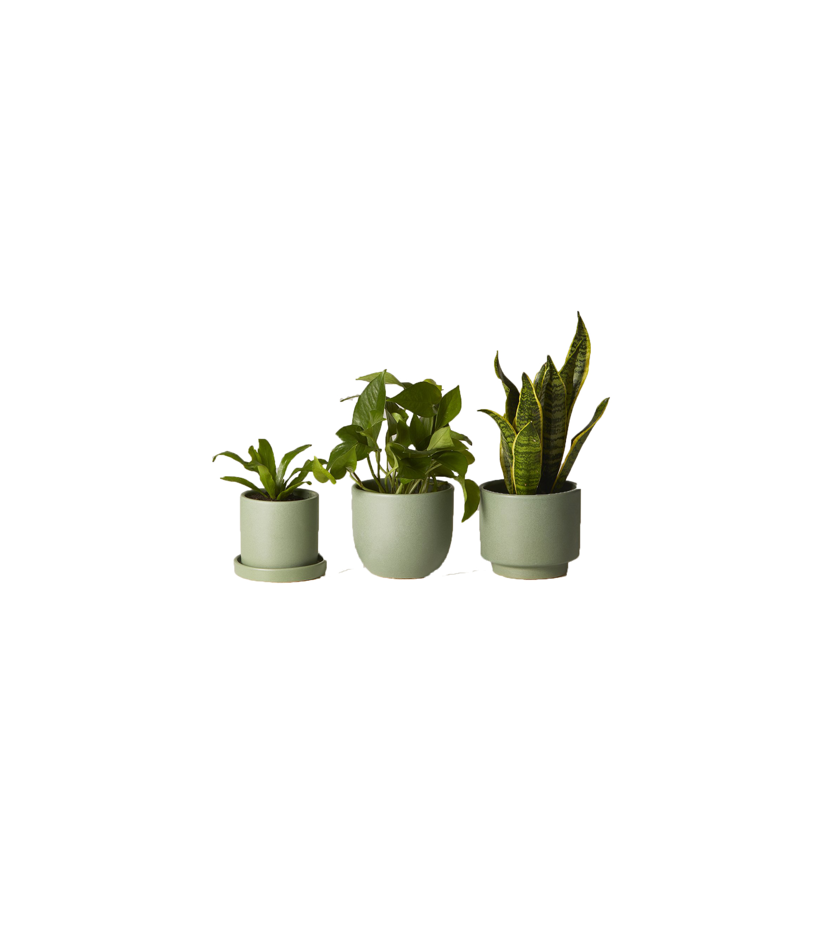 The Sill Plant Subscription