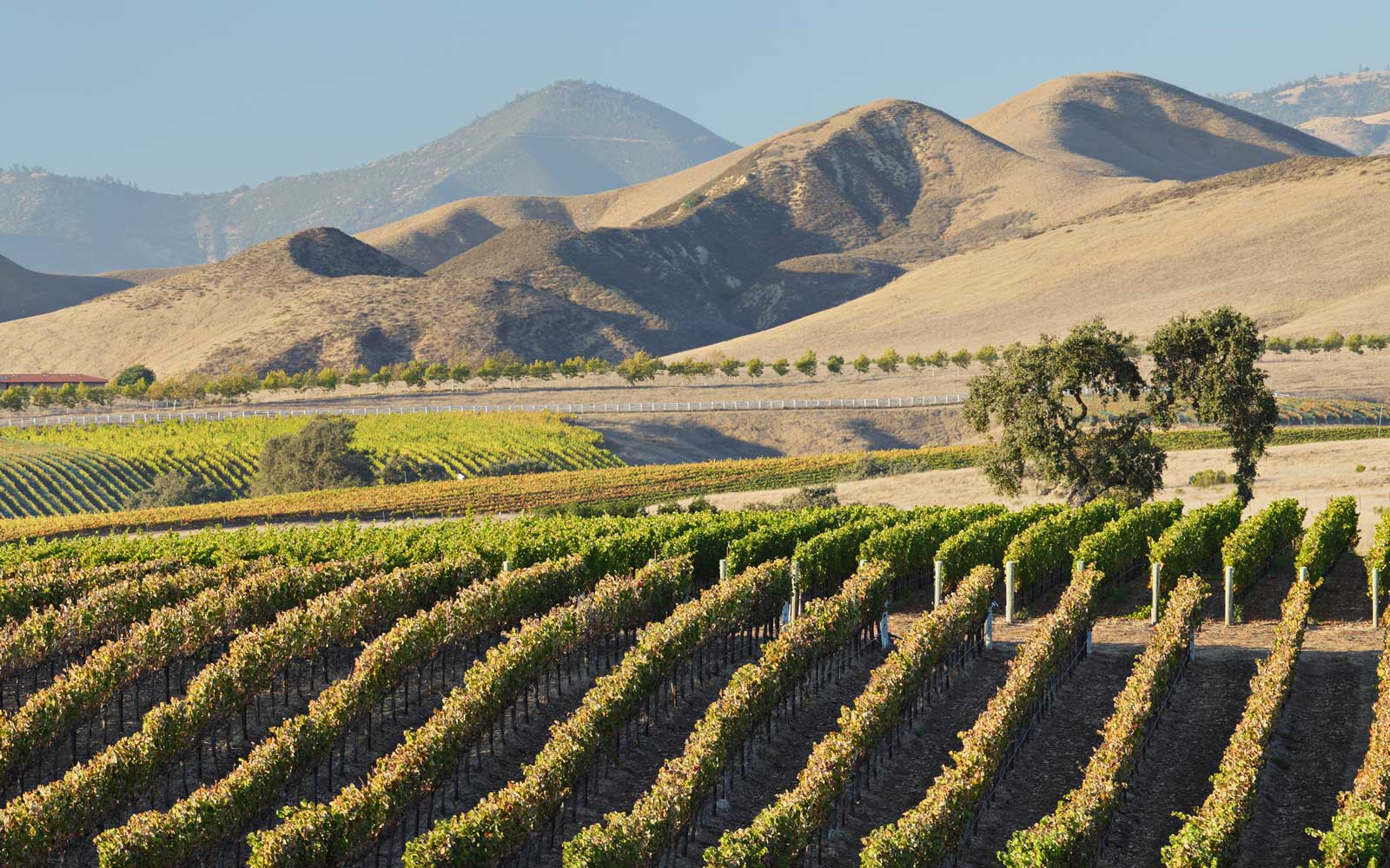 Wine country Santa Ynez, California