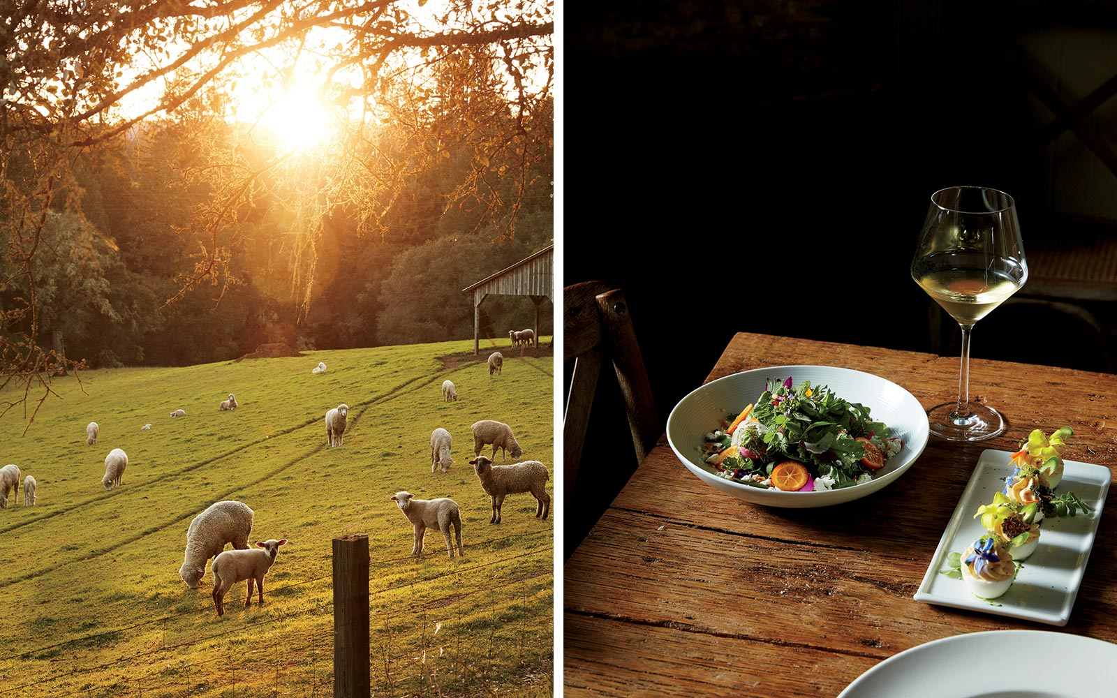 Scenics and Dining in Anderson Valley and Philo, California
