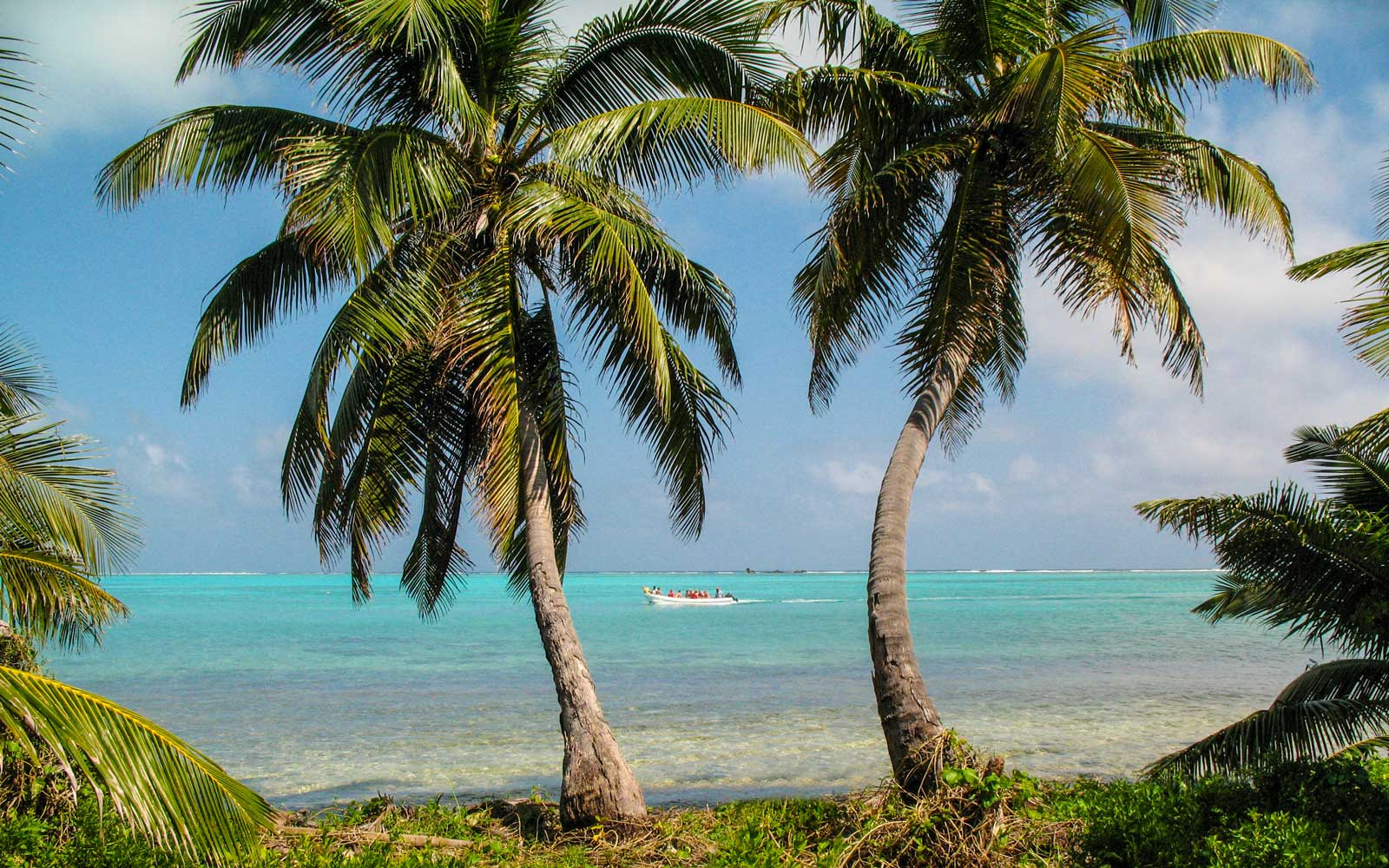 Two coconut palms on Half Moon Caye, Lighthouse Reef Atoll, Belize.