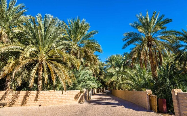 View of Al Ain Oasis, the Emirate of Abu Dhabi