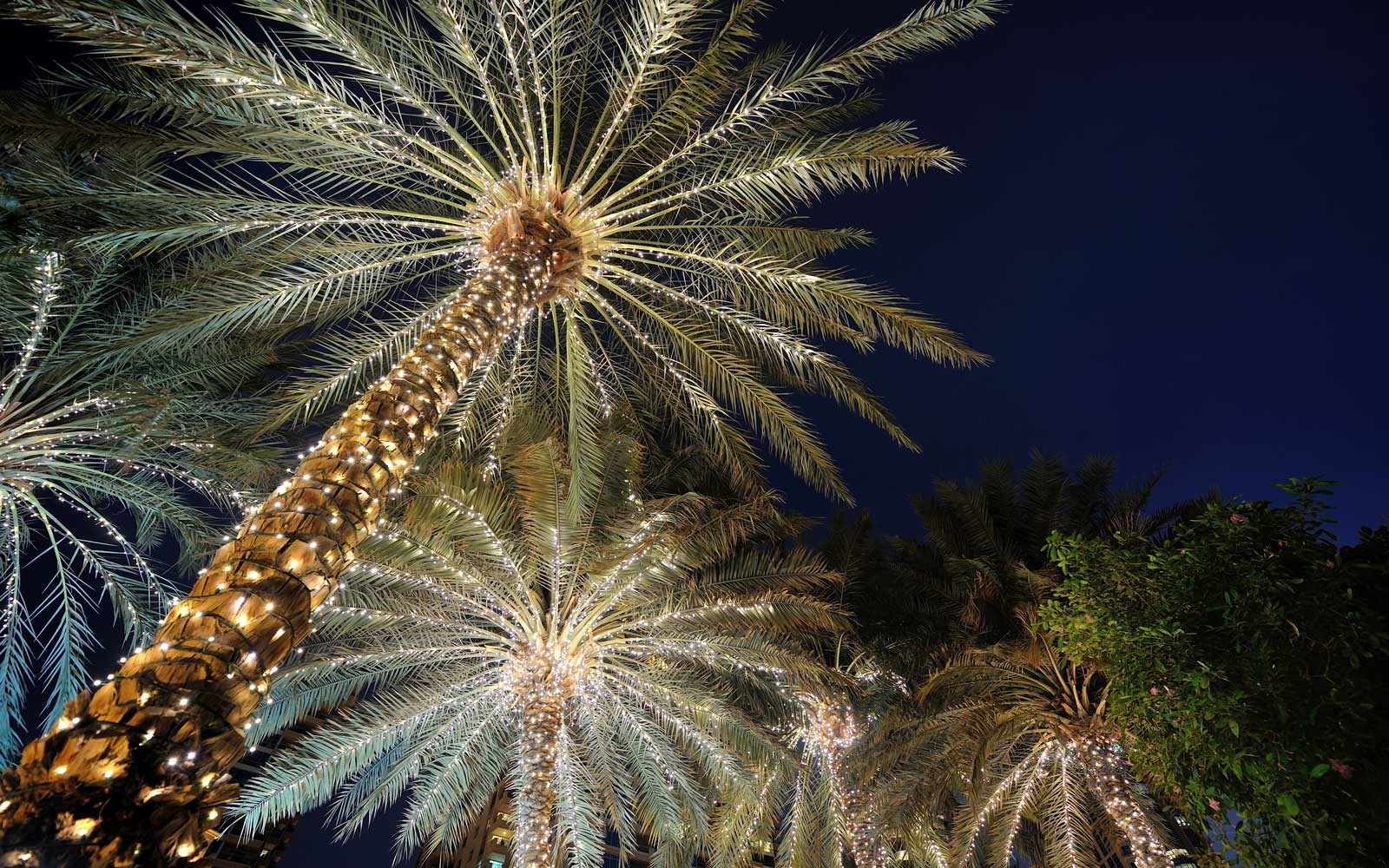 Palm trees decorated for Christmas at The Ritz-Carlton, Naples, Florida