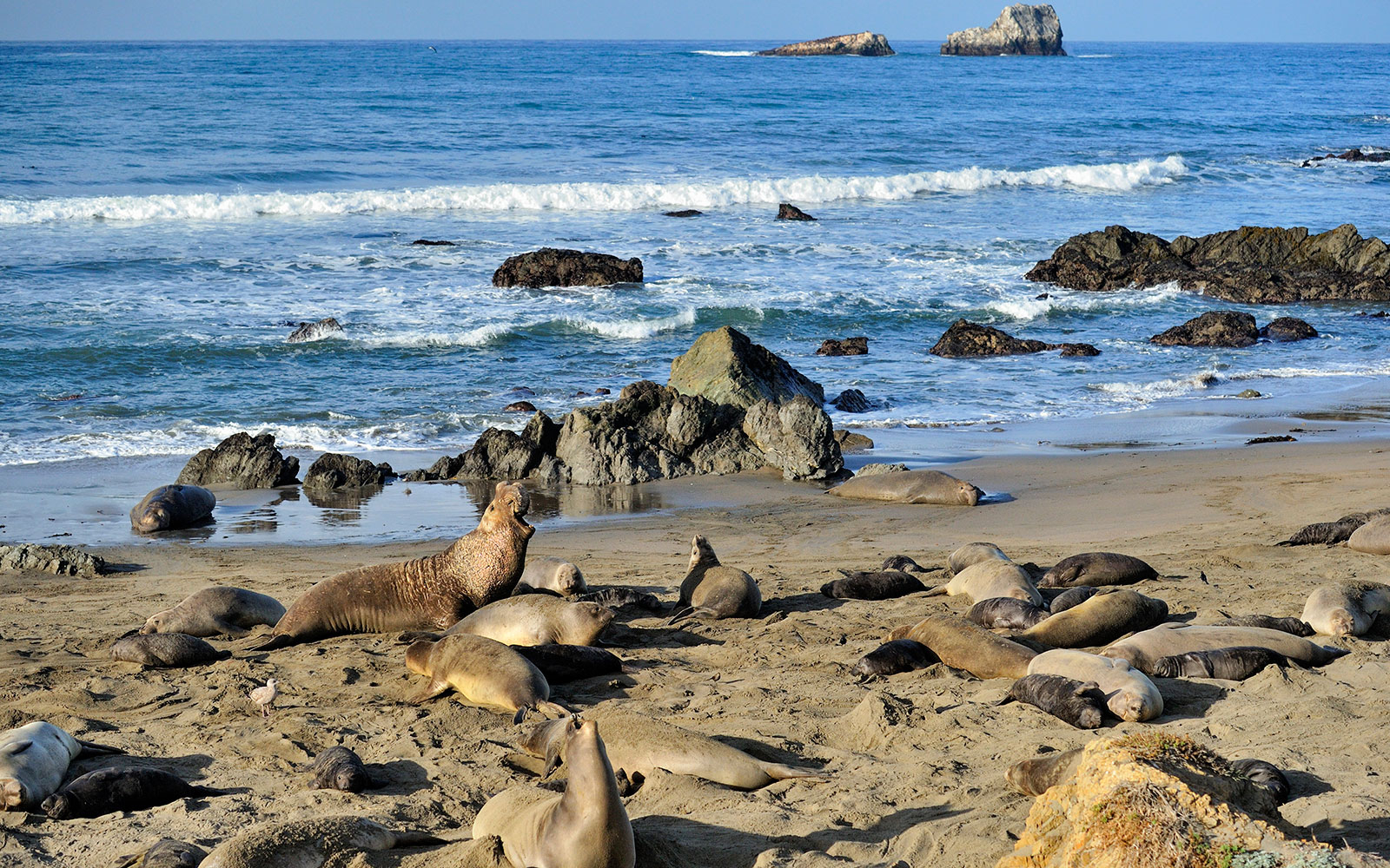 3 p.m.: Stop to see the elephant seals in San Simeon