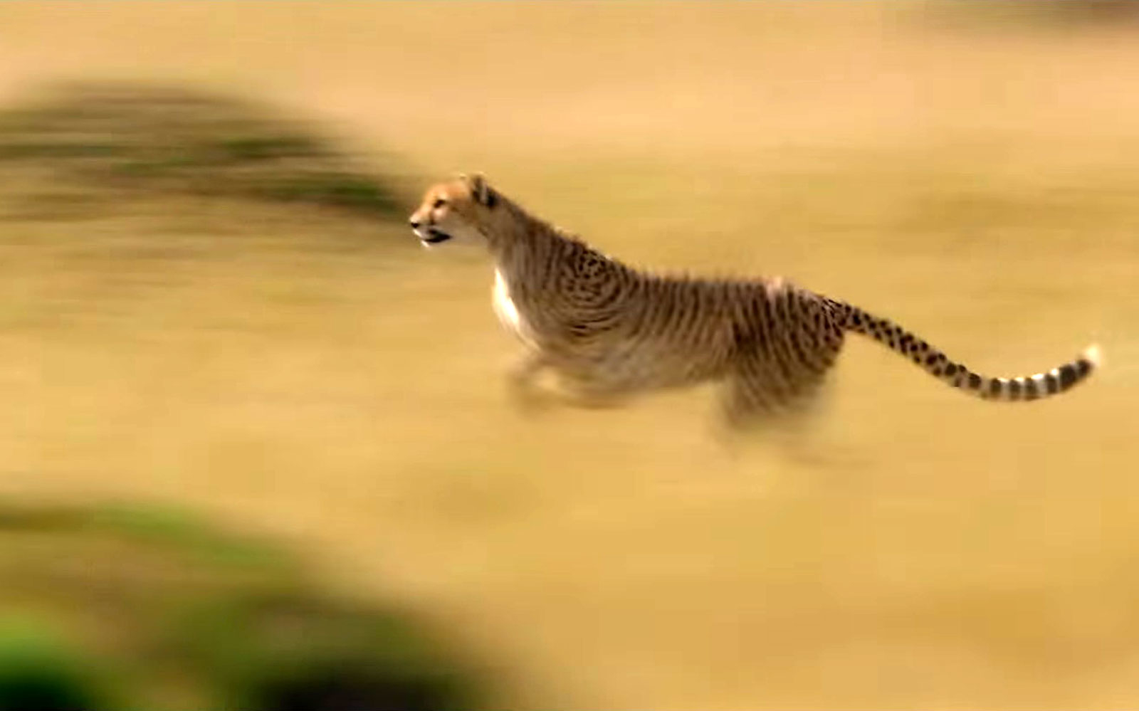 Best Place to See Cheetah