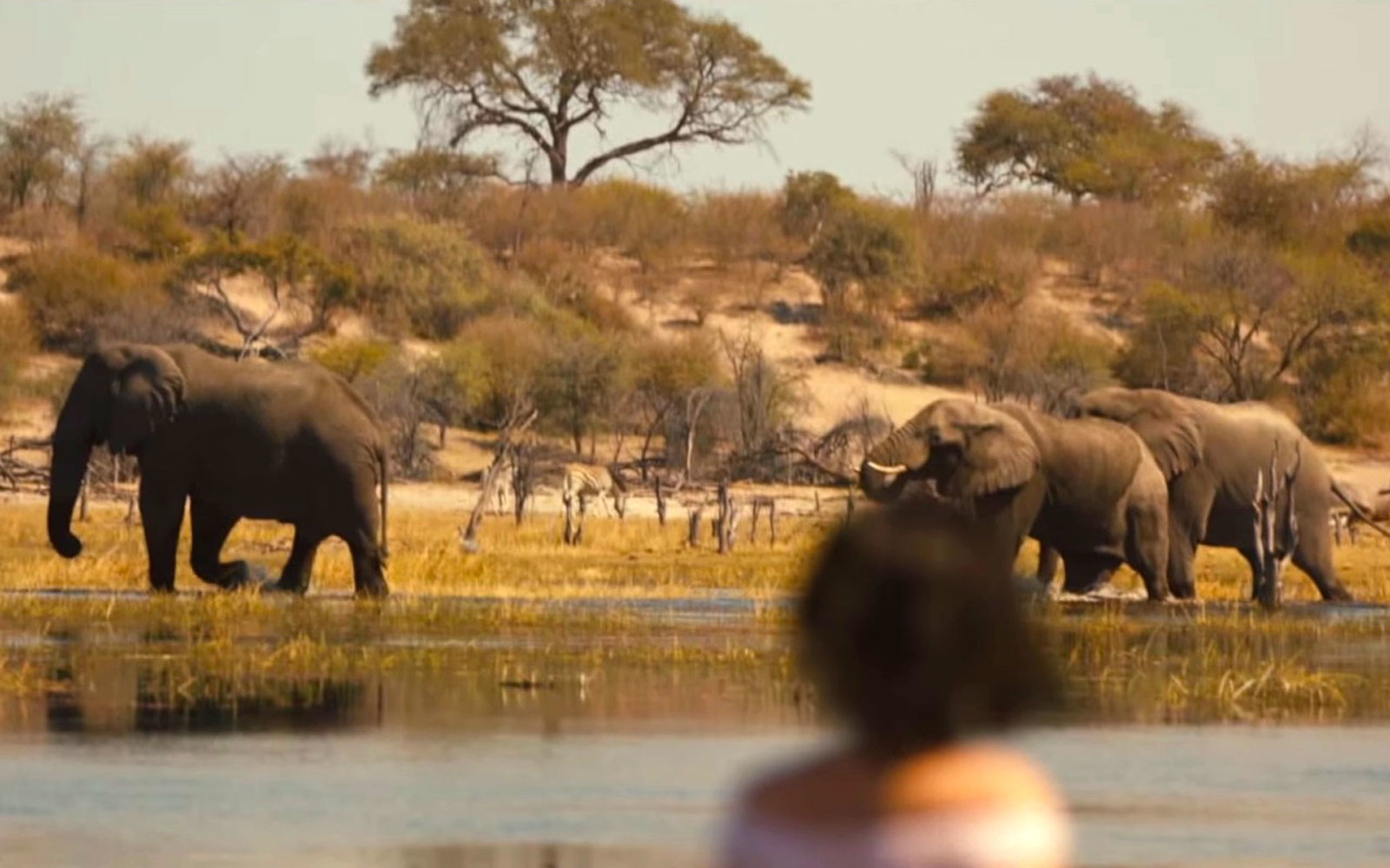 Best Place to See Elephants