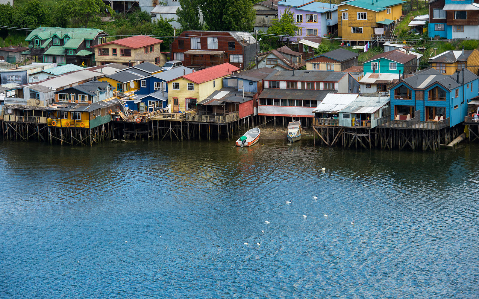 CHILE - 2013/12/14: View of houses on stilts (palafito) with Black-necked swans (Cygnus melancoryphus) swimming on the water in the town of Castro on Chiloe Island in southern Chile. (Photo by Wolfgang Kaehler/LightRocket via Getty Images)