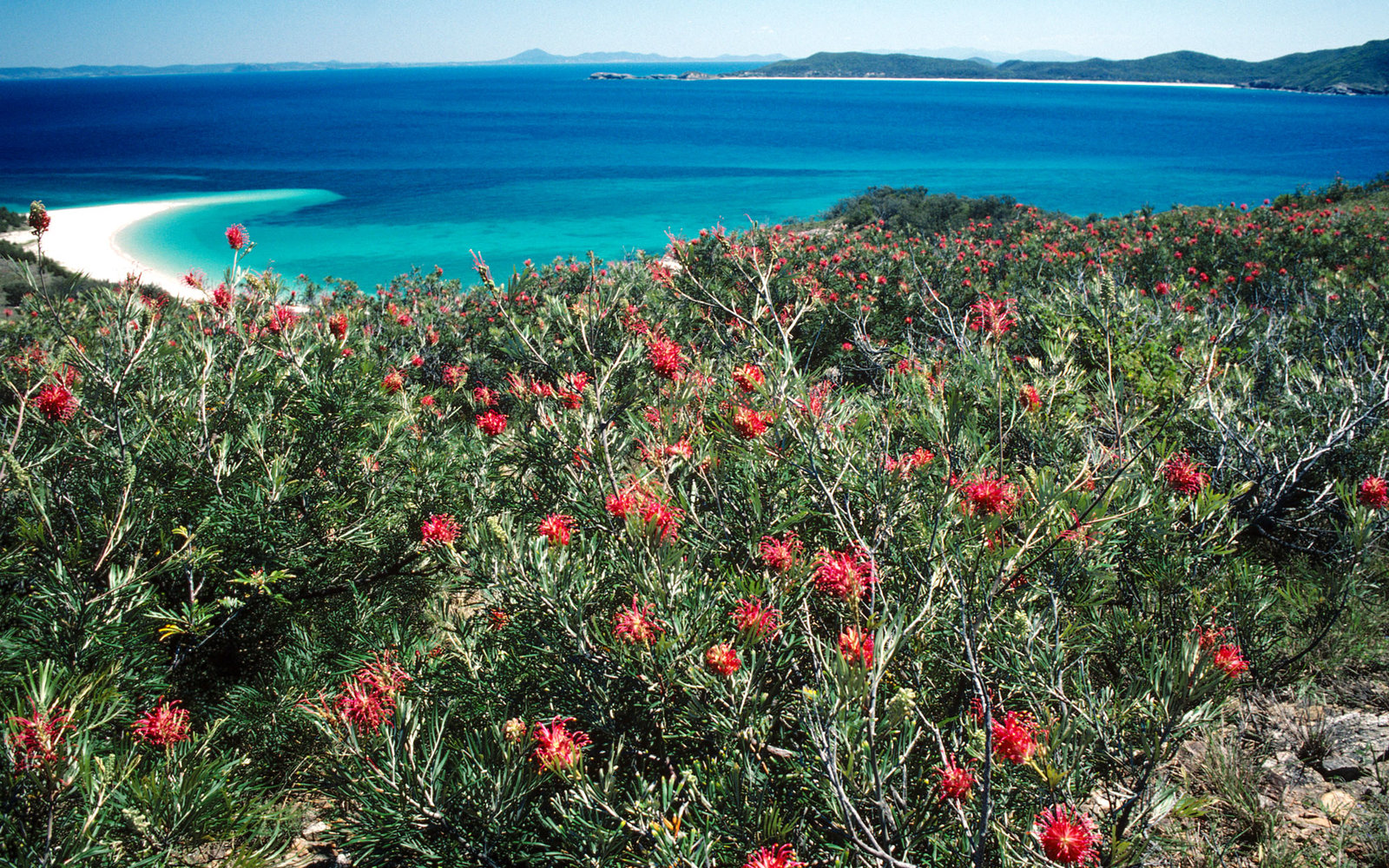 World's Best Beaches for Beauty and Nature Great Barrier Reed Islands