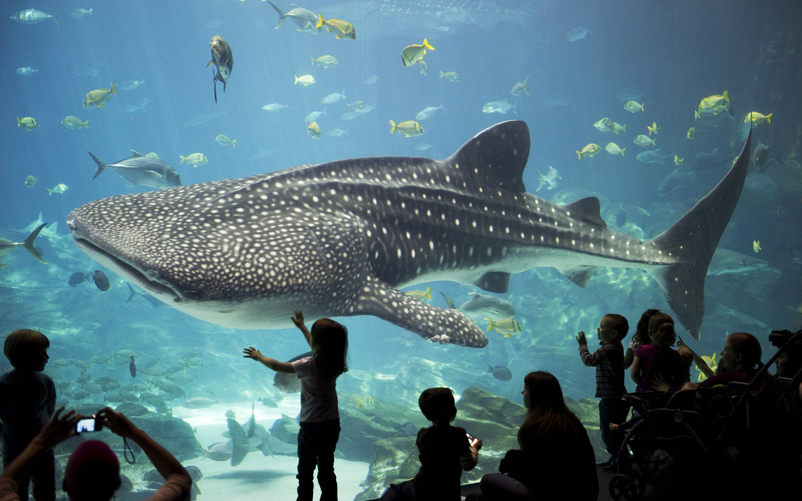 Georgia Aquarium | Travel + Leisure | Travel + Leisure