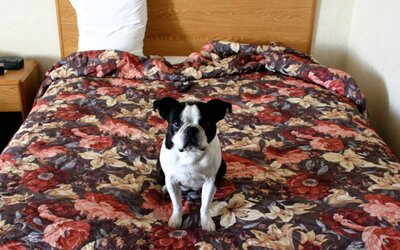 Dog Friendly Cottages and Villas for Your Holiday   Travel +