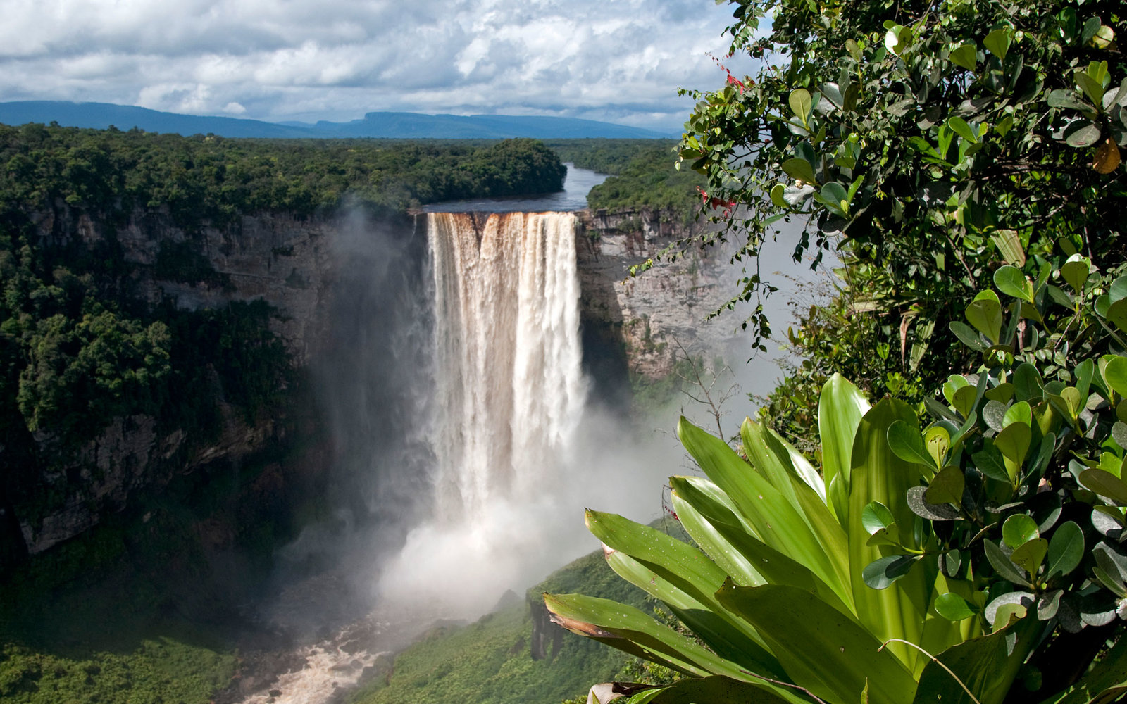 Kaieteur Falls in the background, Kaieteur National Park, Guyana, South America