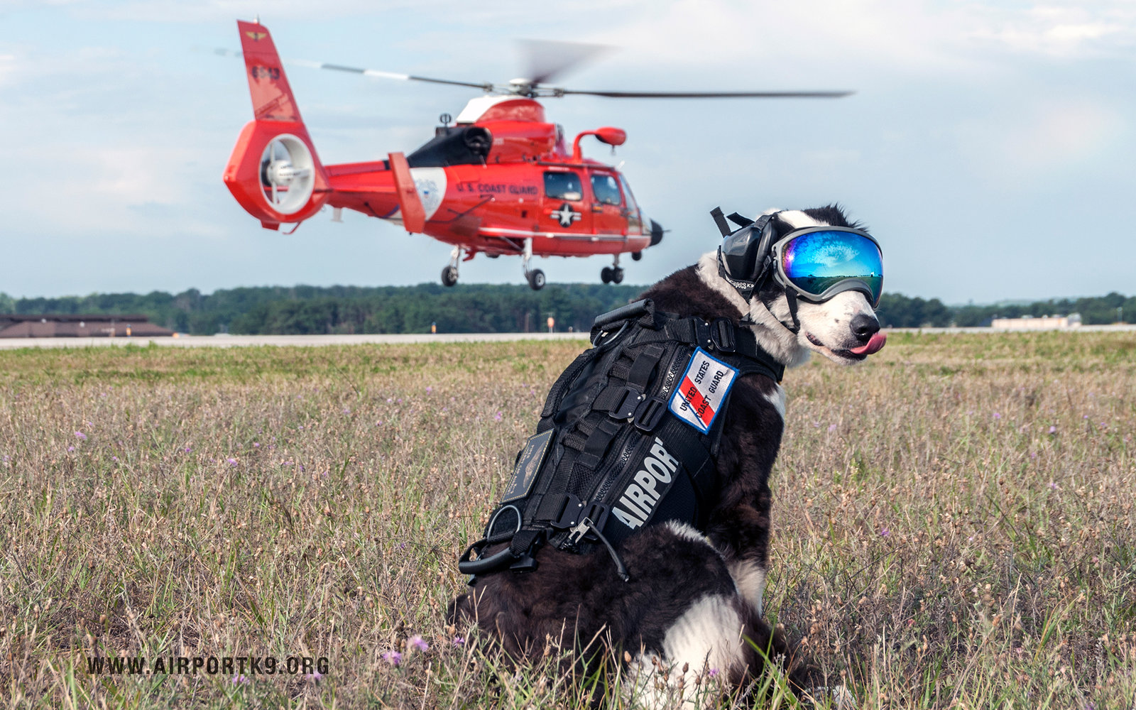 The World's Coolest Airport Employee is a Runway Patrol Dog Named Piper