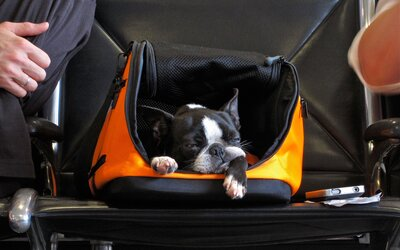 683d930234 Delta's New Rules For Flying with Pets | Travel + Leisure