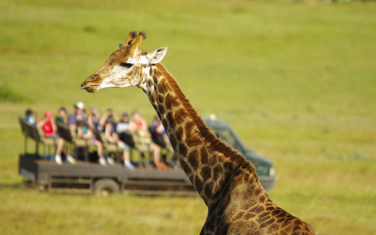 ***EXCLUSIVE***PORT ELIZABETH, SOUTH AFRICA - MARCH 29: Tourists watch a giraffe giving birth in Kragga Kamma Game Park on March 29, 2015 in Port Elizabeth, South Africa.PHOTOGRAPH BY Ayesha Cantor / Barcroft Media (Photo credit should read Ayesha Can