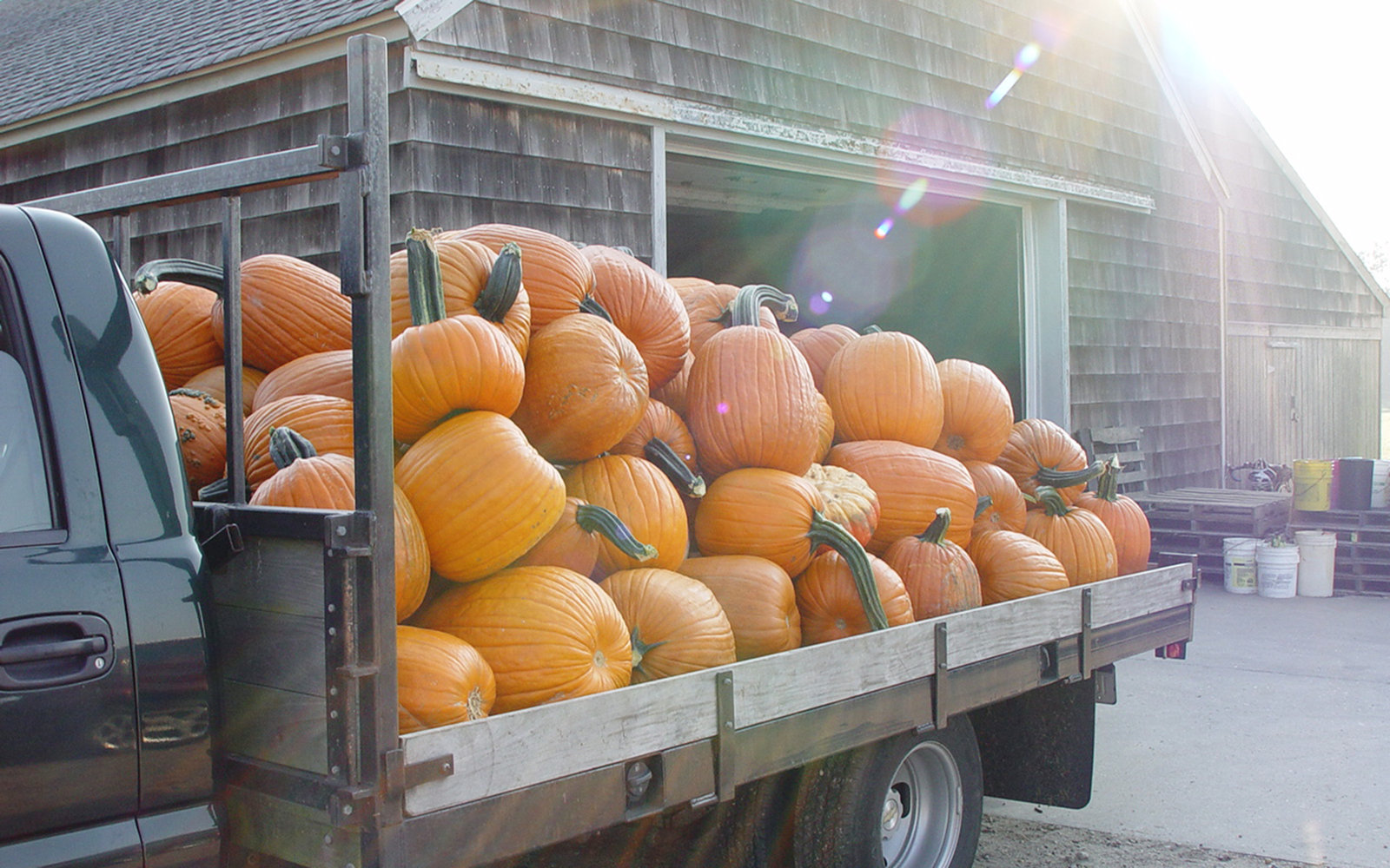 Milk Pail Pumpkin Picking in Water Mill Long Island
