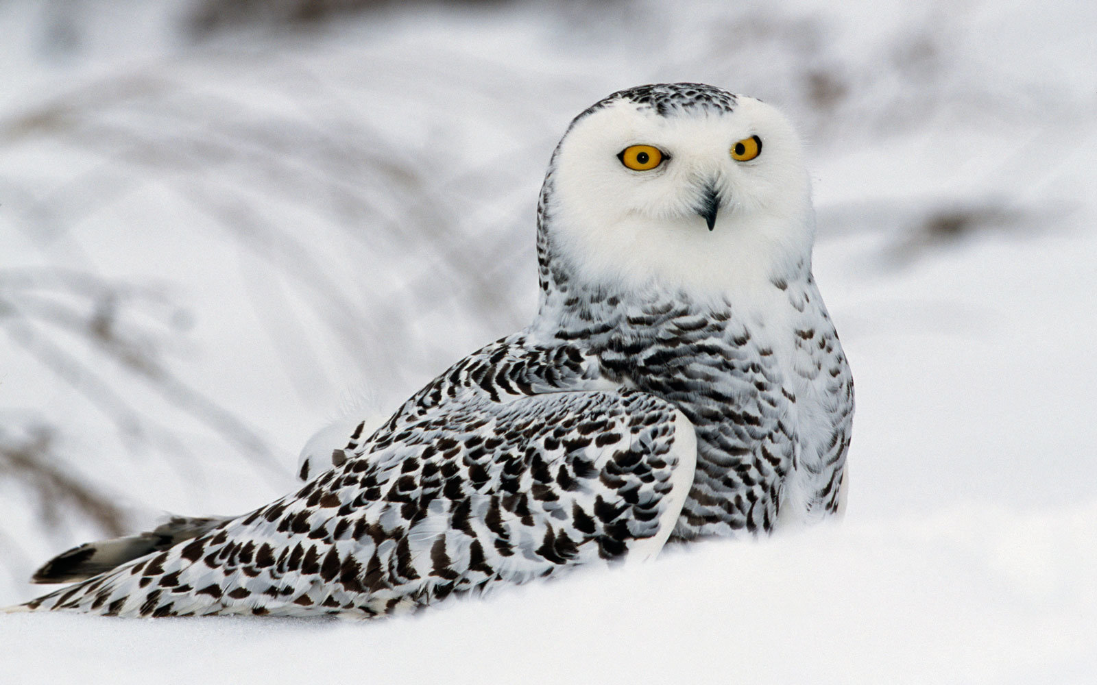Where To See Cute Winter Animals