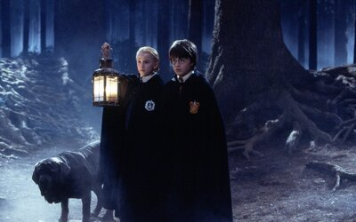 How Harry Potter Fans Can Visit a Real Forbidden Forest