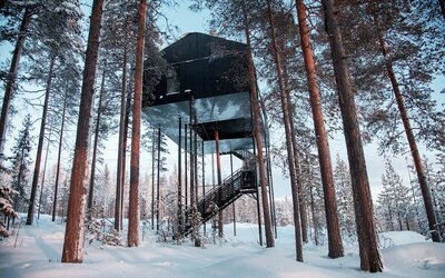 Catch The Northern Lights From A Treetop Hotel In A Forest