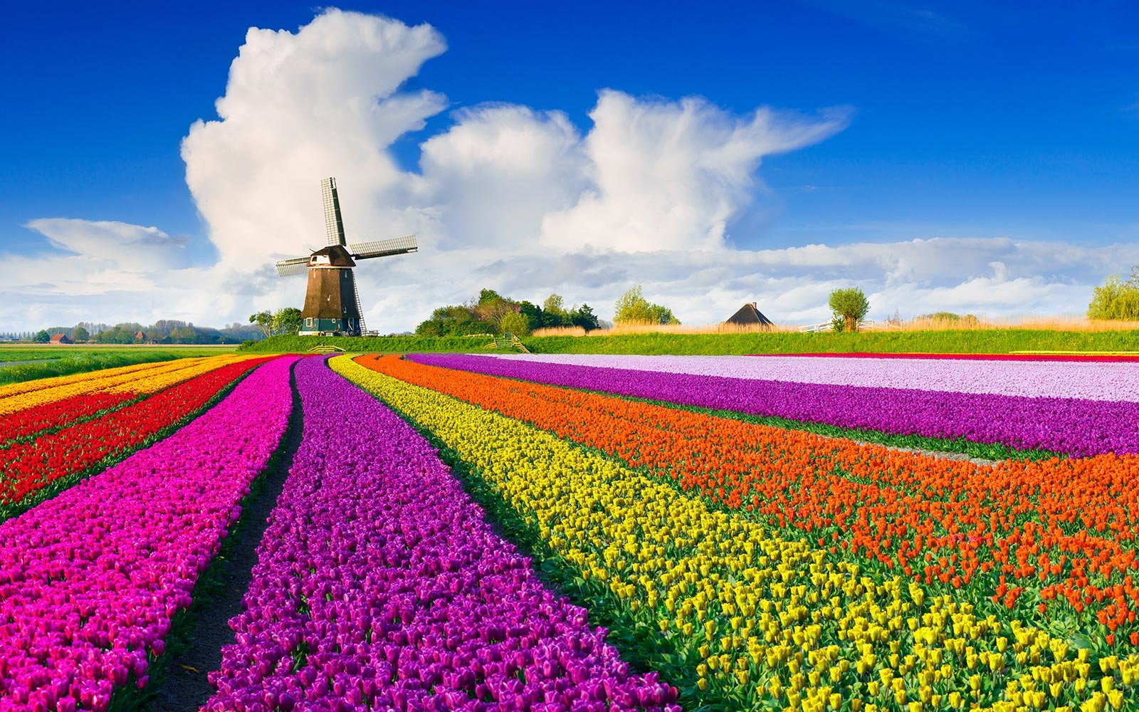 DEAL: $387 to Amsterdam to See Tulips