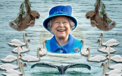 My How Time Flies Queen Elizabeth At 50 >> Why Queen Elizabeth Owns All Of The Dolphins And Swans In England