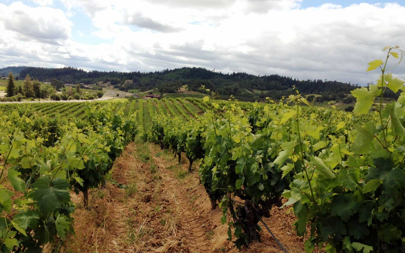 California Wineries You Can Visit