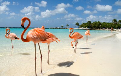 What It's Like to Swim With Flamingos in Aruba | Travel + Leisure