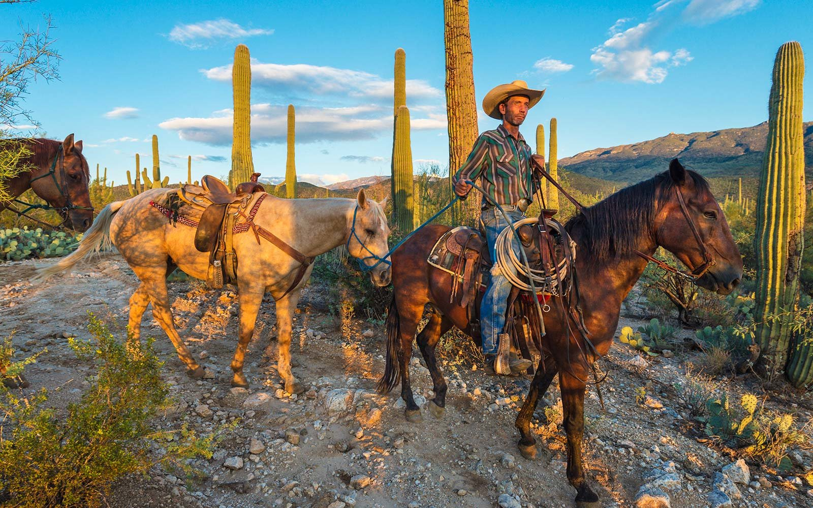 United States of America, Arizona, Tucson, Tanque verde Ranch, horse hike in the middle of the desert