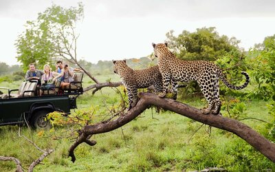 These Are the Best Travel Agents for Booking Trips to Africa and the