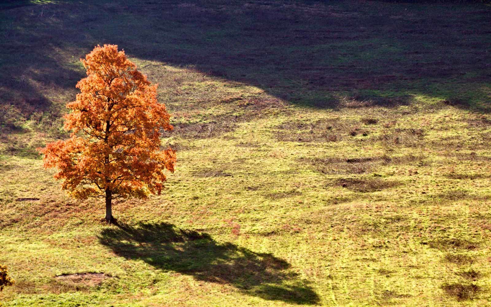 Autumn Tree in Franklin, Tennessee