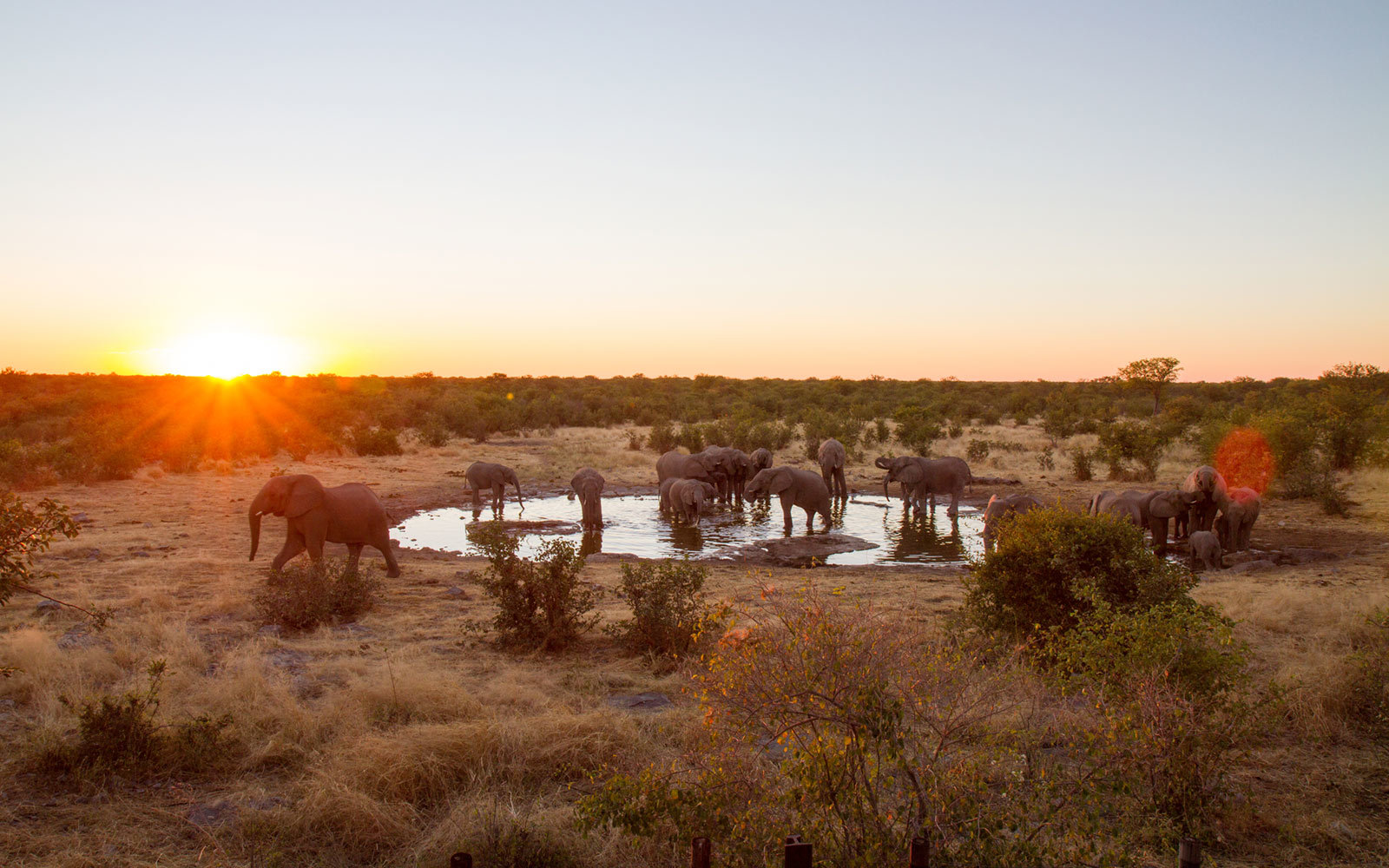 Elephants, Namibia